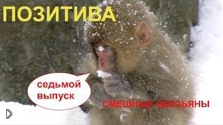Смотреть онлайн Смешные гориллы и орангутанги