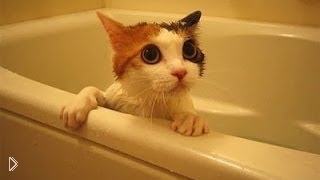Смотреть онлайн Смешные коты разговаривают, когда купаются