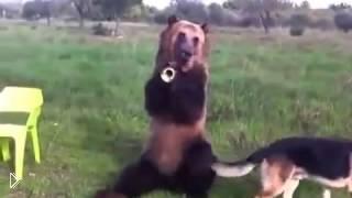 Смотреть онлайн Дрессированный медведь
