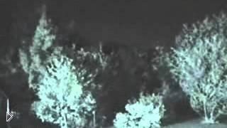 Смотреть онлайн Реальное приведение бродит по лесу