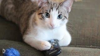 Смотреть онлайн Самый смешной ролик про котов и кошек