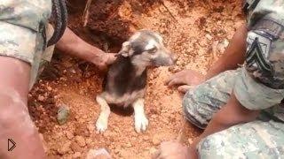 Смотреть онлайн Спасатели достали собаку из-под обломков