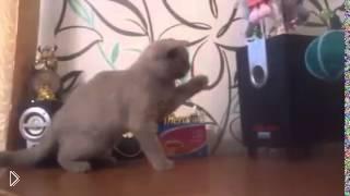 Смотреть онлайн Котенок пытается поймать басы