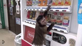 Смотреть онлайн Мартышка покупает сок из автомата