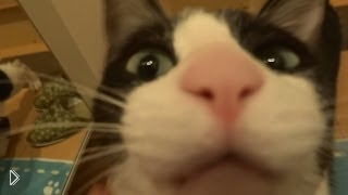Смотреть онлайн Радость кота хозяину, который пришел с работы