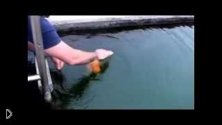 Смотреть онлайн Бесстрашная золотая рыбка