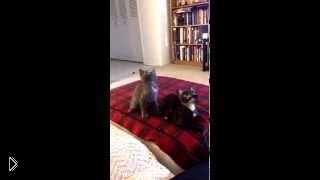 Смотреть онлайн Ржачный прикол про котов со смешной озвучкой