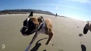 Двуногий пес первый раз без инвалидной коляски - Видео онлайн