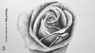 Смотреть онлайн Как нарисовать розу карандашом поэтапно