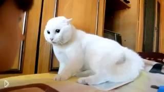 Голова манекена до одури напугала кота - Видео онлайн