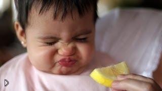 Смотреть онлайн Маленькие дети первый раз пробуют лимон