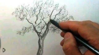 Смотреть онлайн Как нарисовать красивое дерево поэтапно