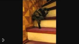 Смотреть онлайн Котик поднимается по лестнице пританцовывая