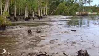 Смотреть онлайн Необъяснимое явление природы в мире: деревья тонут