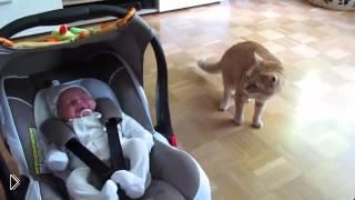Смотреть онлайн Кот первый раз увидел младенца