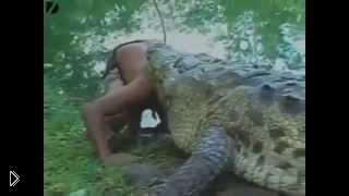 Подборка: борьба людей и диких зверей - Видео онлайн