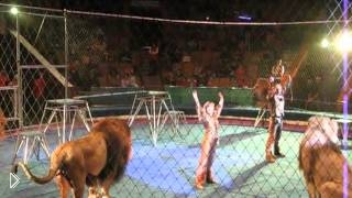 Смотреть онлайн Яростное нападение льва на дрессировщика