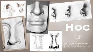 Смотреть онлайн Как правильно поэтапно рисовать нос человека