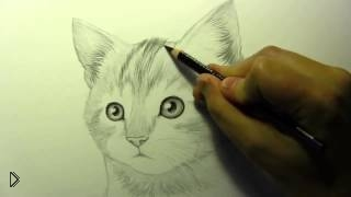 Смотреть онлайн Как поэтапно карандашом нарисовать милого котенка