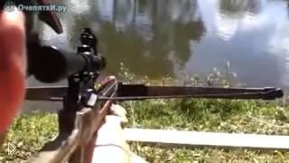 Смотреть онлайн Рыбалка с арбалетом