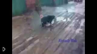 Смотреть онлайн Истории чудесного спасения бездомных собак