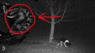 Смотреть онлайн Ужас! Собаку неожиданно атакует чупакабра