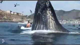 Смотреть онлайн Самое большое животное кит попал в кадр случайно