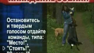 Как защитится от нападения собаки на людей - Видео онлайн