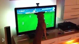 Смотреть онлайн Забавные животные смотрят ЧМ 2014