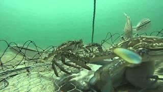 Смотреть онлайн Камера на ловушке крабов под водой