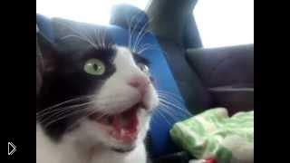 Смотреть онлайн Кот в шоке от первой поездки