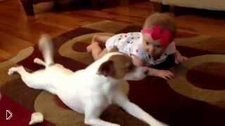 Смотреть онлайн Собака учит девочку как правильно ползать