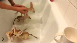 Смотреть онлайн Маленькие лисы купаются в ванной