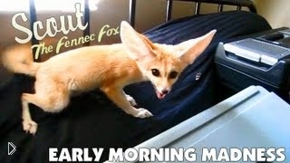 Смотреть онлайн Маленький лисёнок напугал собаку