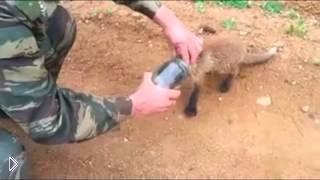 Смотреть онлайн Маленький лисёнок застрял головой в банке
