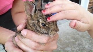 Смотреть онлайн Кролики тоже умеют летать