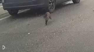 Смотреть онлайн Кошка неожиданно выбежала на дорогу