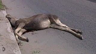 Смотреть онлайн Подборка столкновений с животными