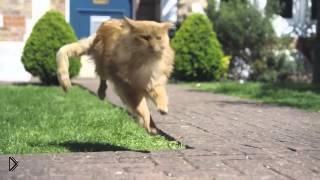 Смотреть онлайн Коты мечтают быть собаками