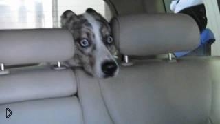 Смотреть онлайн Собака в ужасе от автомойки