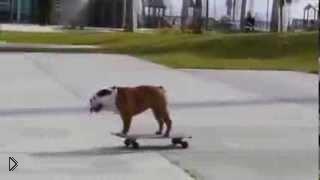 Смотреть онлайн Пес обожает катание на скейте