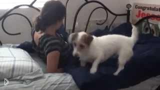 Смотреть онлайн Собака лучший друг человека