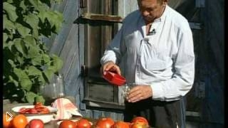 Смотреть онлайн Как достать семена из томатов
