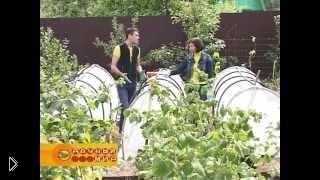 Смотреть онлайн Как подготовить грядки и посадить землянику осенью