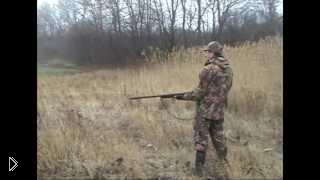 Смотреть онлайн Охота на дикого фазана с собаками