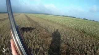 Смотреть онлайн Охота на перепела с собакой дратхааром