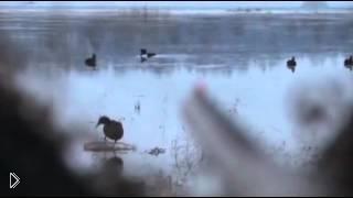 Смотреть онлайн Охота на утку осенью