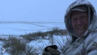Смотреть онлайн Охота на стаю волков зимой