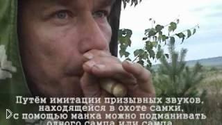 Смотреть онлайн Охота на самца сибирской косули
