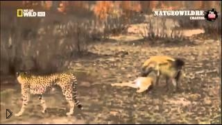 Смотреть онлайн Добыча обманула сразу двух охотников